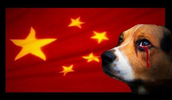 ONG 1 - Stop Yulin
