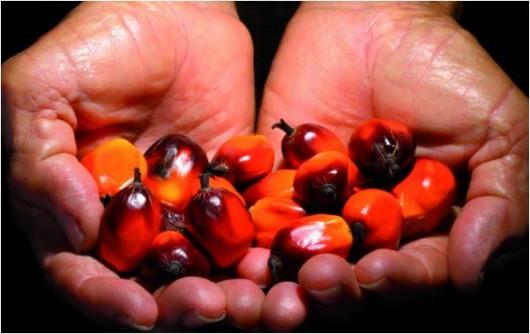 ANIA - huile de palme durable