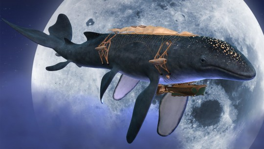 AMD - Leviathan whale